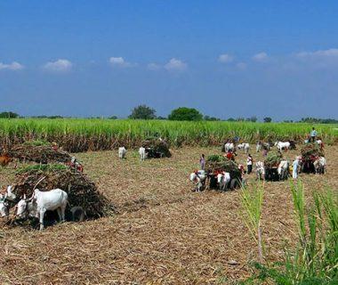 Промышленность и сельское хозяйство Индии