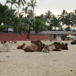 Погода в Гоа в декабре